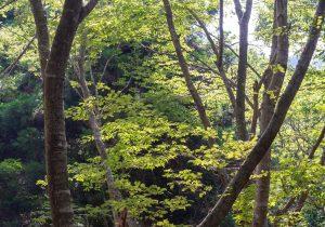 「光の森」曽根沼公園